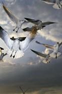 White Doves Flying in Sky