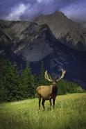 Elk Against Mountainside
