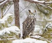 Owl in a Snowy Tree