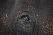 Close Up of Elephant Eye