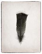 Feather III BW