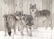 Three Grey Wolves on Wood