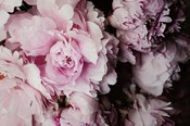 Peonies Galore I