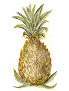 Pineapple Sketch I