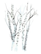 Aquarelle Birches II