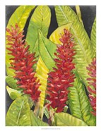 Red Tropical Flowers I