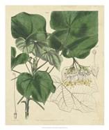 Curtis Leaves & Blooms I