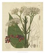 Curtis Leaves & Blooms II