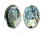 Abalone Shells I