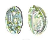 Abalone Shells II