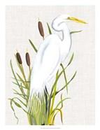 Waterbirds & Cattails III