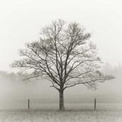 Winter Tree, Cades Cove