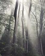 Woodland Sun