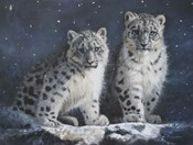Young Snow Leopards Into the Dark