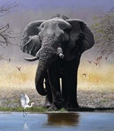 Elephant, Egret And Carmines