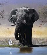 Elephant, Egret And Carmines
