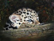 Peekaboo Amur Leopard Cub