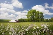 Flowers & Farm, Holmes County, Ohio 10