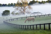 Horses in the Mist #3, Kentucky 08