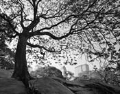 Central Park #1, New York, New York 05