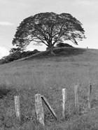 Lone Tree & Fence, Costa