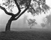Morning Mist, Farmington Hills, Michigan 82