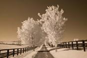 Fence & Trees, Kentucky 08