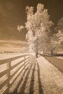 Fence, Shadows, & Trees, Kentucky 08