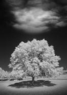 Lone Tree & Cloud, Green Bay, Wisconsin 12