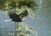 Forest Flight / Eagle