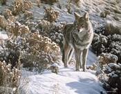 Winter Sage- Coyote