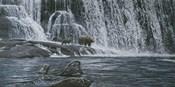 Grizzlies / Falls