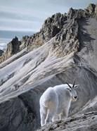 Ramparts- Mountain Goats
