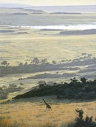 Morning On The Mara