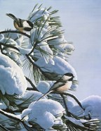 Snow On The Pine - Chickadees