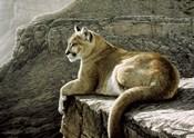 Rimrock - Cougar