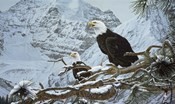 Eagles In The Pine