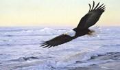 Ocean Dawn- Eagle