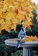 Autumn Birdbath