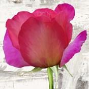 Spring Roses II