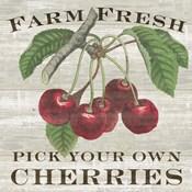 Farm Fresh Cherries I