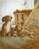 Autumn Playtime