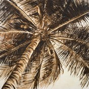 Coconut Palm II