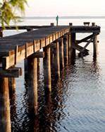 Waterside Beauty II