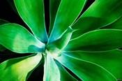 Green Intrigue