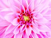Pink Explosion I