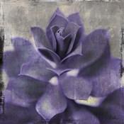 Lavender Succulent I
