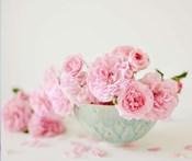 Petals and Porcelain