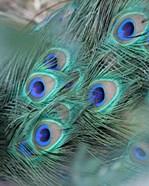 Enchanted Feather II