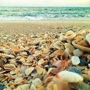 Shells Beach I